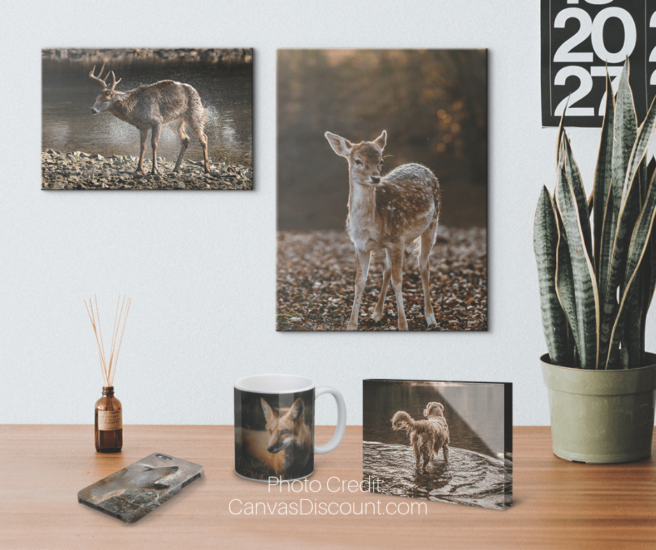 Wildlife Photo Gifts next to Plant