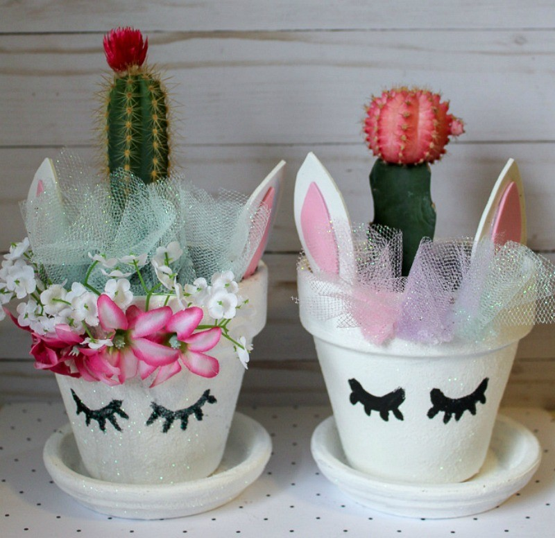 Unicorn Cactus Plants