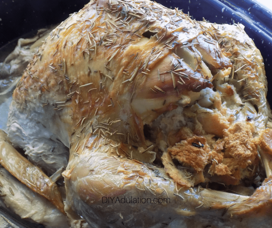 Back of Baked Whole Turkey in Roasting Pan