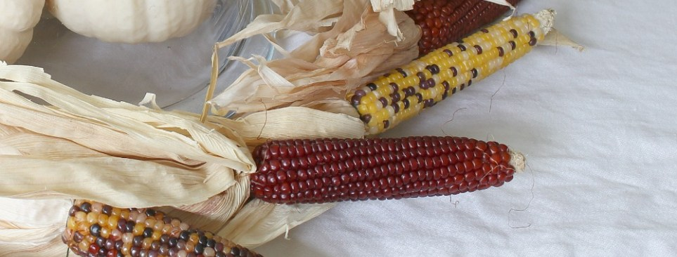 Close up of mini corn